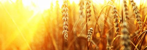New Challenges in Agronomy